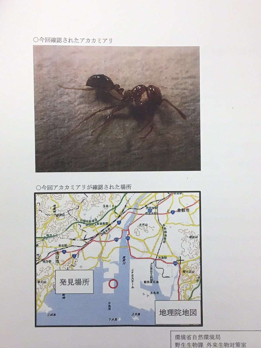 test ツイッターメディア - ※昆虫画像あり  先日、水島港で特定外来生物であるアカカミアリが発見されました。現在は殺虫処理、殺虫餌設置など対策は完了しておりますが、万が一疑わしいアリを発見された場合は、画像2枚目のヒアリ相談ダイアルまでご連絡下さいませ。 https://t.co/myi3ZUQuxo