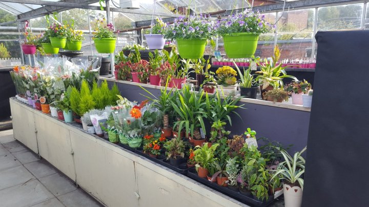 """bromborough pool garden centre on twitter: """"lots and lots of plants"""