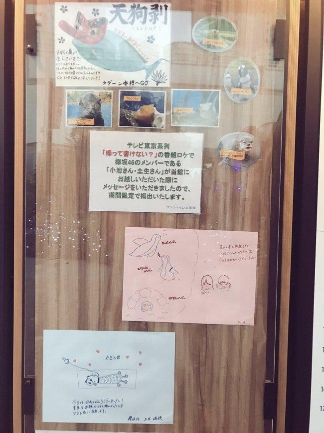 test ツイッターメディア - 『欅って、書けない?』ロケで訪れたサンシャイン水族館にて小池美波と土生瑞穂の感謝メッセージを期間限定で展示 https://t.co/m1hGWj63xN https://t.co/Du42lgz2xE