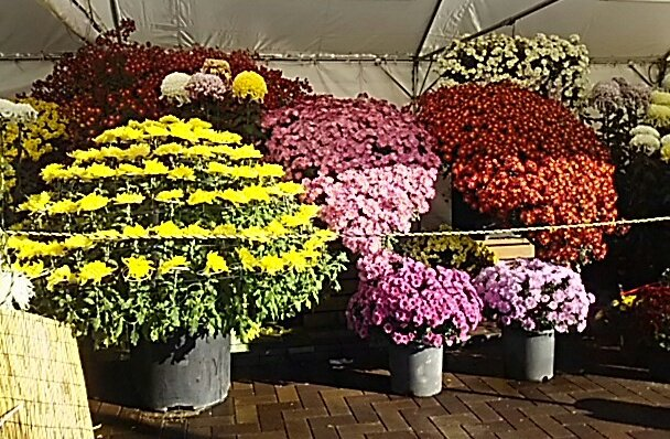 test ツイッターメディア - @smile_apple @nathu8gathu @sammy_oda @piro_cha @th1028 @lapis_26 おはようございます。⚪⚪女性部のウォーキング会で 広島県 せら夢公園へ🚶🎵。 紅葉が残ってるかしら?🍁。 世羅の今朝の気温は 0℃になってました👀。  山陽道下り 福山S.Aで 素敵な出会いが 有りました🌼。 https://t.co/kOZq1VIeR2
