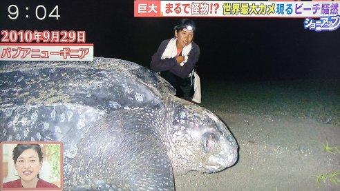 「オサガメ」の画像検索結果