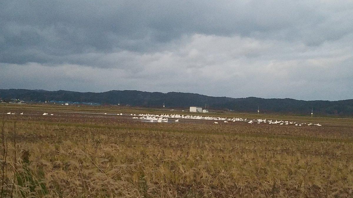 test ツイッターメディア - おはようございます。 今日も一日、 頑張っていきまっしょい(^-^)v 今朝の弥彦山 田んぼの白鳥 いつもの代わり映えのしない写真(^-^; #弥彦山 #新潟 #大好き新潟 #白鳥 #写真好きな人と繋がりたい https://t.co/ArPk9rr5Q3