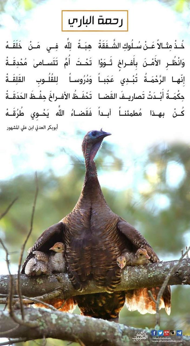 أحمد العواضي V Twitter الراحمون يرحمهم الرحمن ارحموا من في