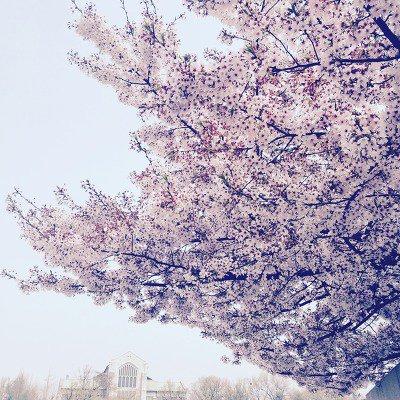 꽃은 어디에나 핀다