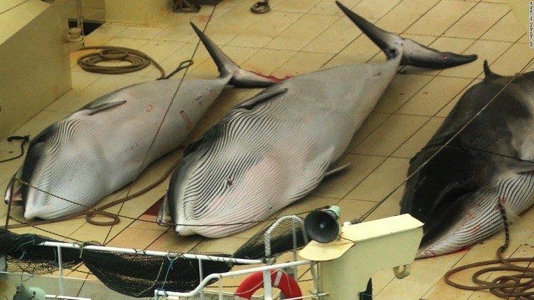 test ツイッターメディア - 日本政府、IWC脱退を表明 商業捕鯨再開へ https://t.co/UaeQIdkscq https://t.co/AvLmxuZIfh