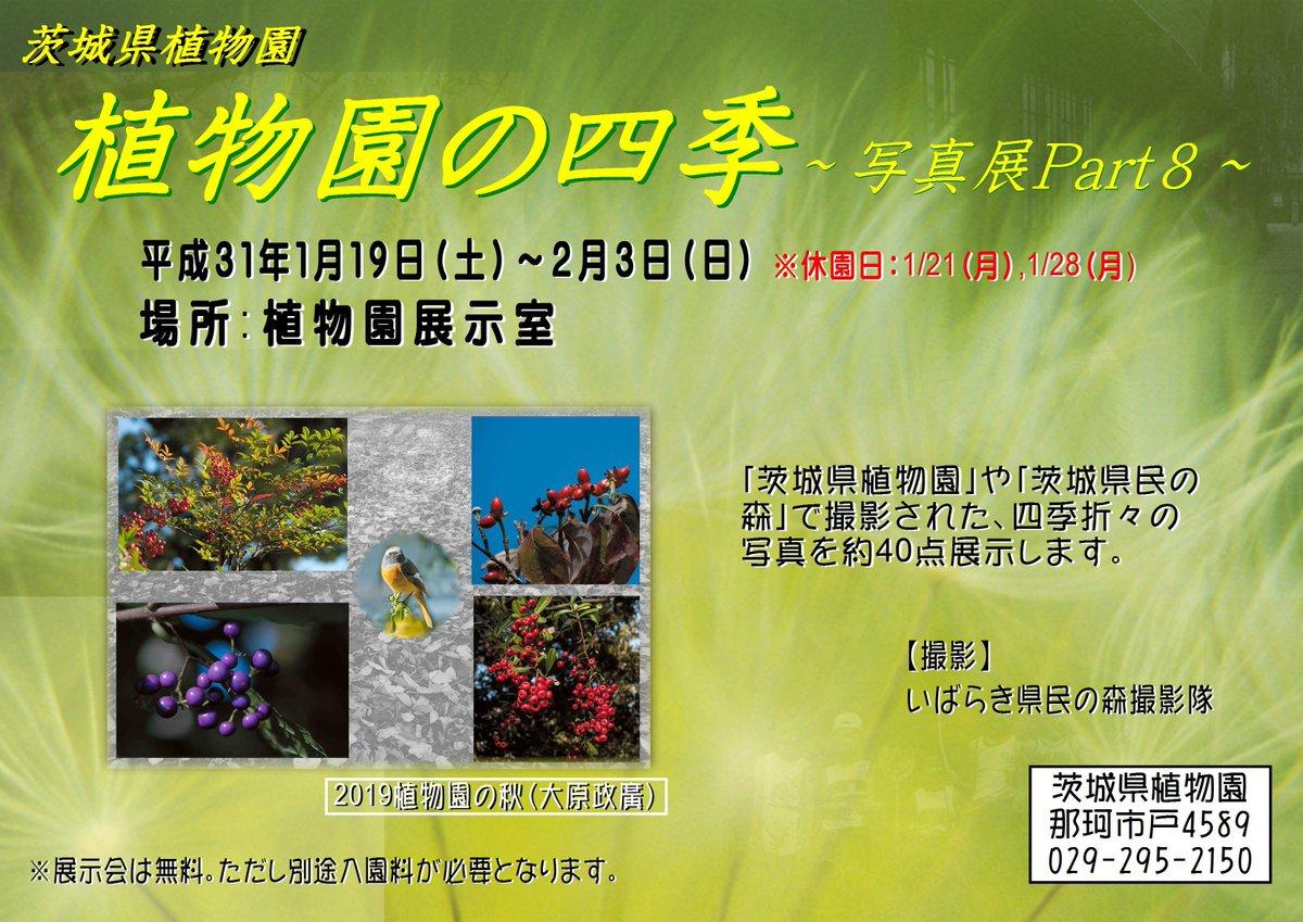 test ツイッターメディア - 【植物園の四季~写真展Part8 ~】 1/19(土)から2/3(日)まで、県植物園や茨城県民の森で活動するボランティア団体『いばらき県民の森撮影隊』が撮影した花やイベントの写真など約40点を展示します。花や景色の四季による変化を写真でお楽しみください。 https://t.co/wWts6S7ur1
