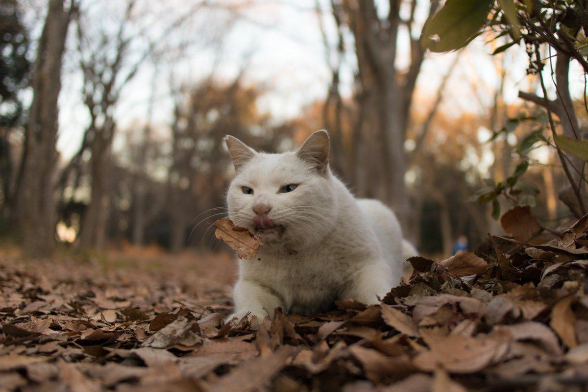 test ツイッターメディア - 「〇〇すぎるネコ写真コンテスト」2回連続入選!! 嬉しい。 「〇〇すぎるマスター」を目指し、冷マのコンプリート目指していきまーす。  #通販生活 #すぎるネコ写真コンテスト #ねこ #ネコ #猫 #猫写真 #ねこ写真 #ねこ部 #カメラ部 #東京カメラ部 https://t.co/Qlxsv8hk3o