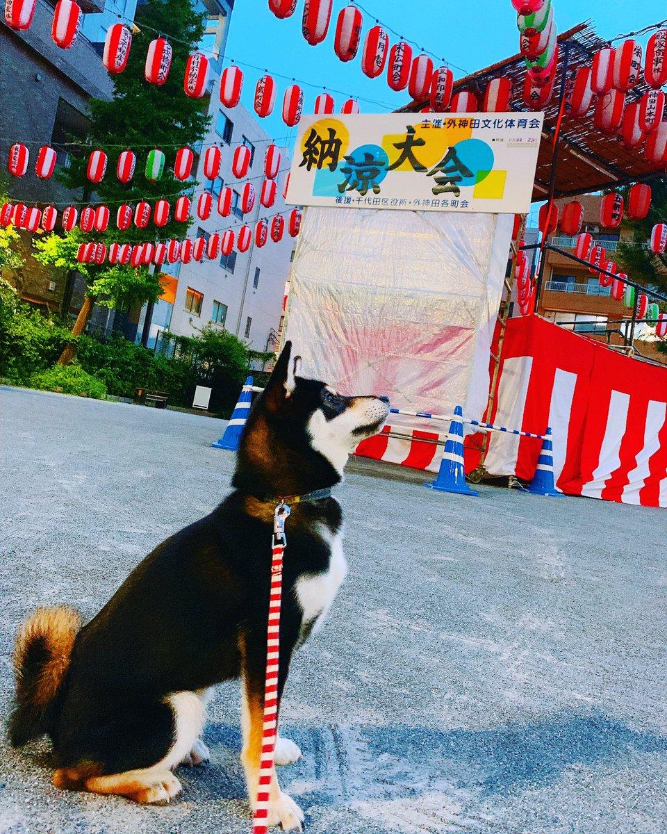 test ツイッターメディア - 豆柴と祭り🐕💕 お散歩に行ったらお祭りの飾り付けが🏮✨夏ですね🍧  いぬのきもち#犬ばか部#犬カフェ#犬すたぐらむ#犬のいる暮らし#黒柴#豆柴#柴すたぐらむ#柴犬#プードル#犬好きな人と繋がりたい#東京#秋葉原#インスタ映えスポット https://t.co/7Qbi5wMDW7