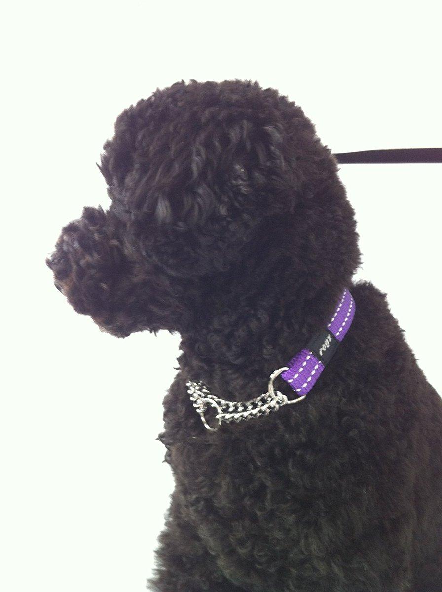 test ツイッターメディア - 犬の外耳炎 かかりやすい犬種 垂れ耳の犬種(コッカー・スパニエル、レトリーバー、ダックスフンドなど)や、外耳道に毛が密に生えている犬種(テリア、プードルなど)がかかりやすいです。 アクサダイレクトいぬのきもち保険さんから資料をお借りしました。 ウィルも治療中です💦 #外耳炎 https://t.co/DquOB8Pumv
