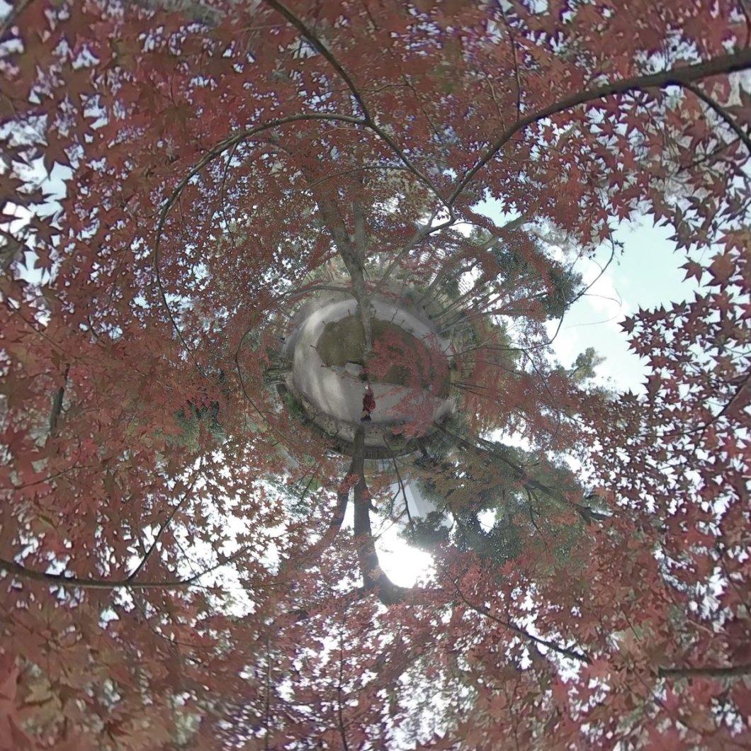 test ツイッターメディア - #広島 の名勝縮景園の #紅葉 を #360度カメラ で撮影して #リトルプラネット にしました  #littleplanet #tinyplanet #360 #360degrees #360度 #camera360 #360photography #photosphere #360view #360photo #lifein360 #insta360 #insta360onex #japan #hiroshima #広島旅行 https://t.co/uoZre6Uqo2