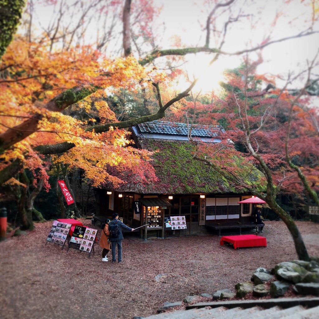test ツイッターメディア - #奈良 #奈良観光 #奈良旅行  #奈良公園 #春日大社 #茶屋 #ちょっと一服  #大正初期 #茅葺き屋根  #nara #narajapan  #narapark #deerpark  #kasugataisha  #autumncolors  #autumn_nara  #japan_daytime_view https://t.co/J31JqKpOp1