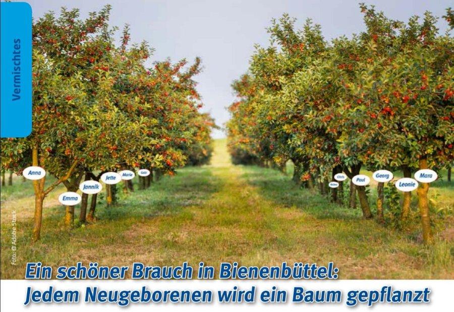 test Twitter Media - Ein schöner Brauch in Hamburgs Nachbarschaft: in Bienenbüttel wird jedem 🚼 Neugeborenen ein 🌳 Baum gepflanzt https://t.co/lHtZhUkPYU