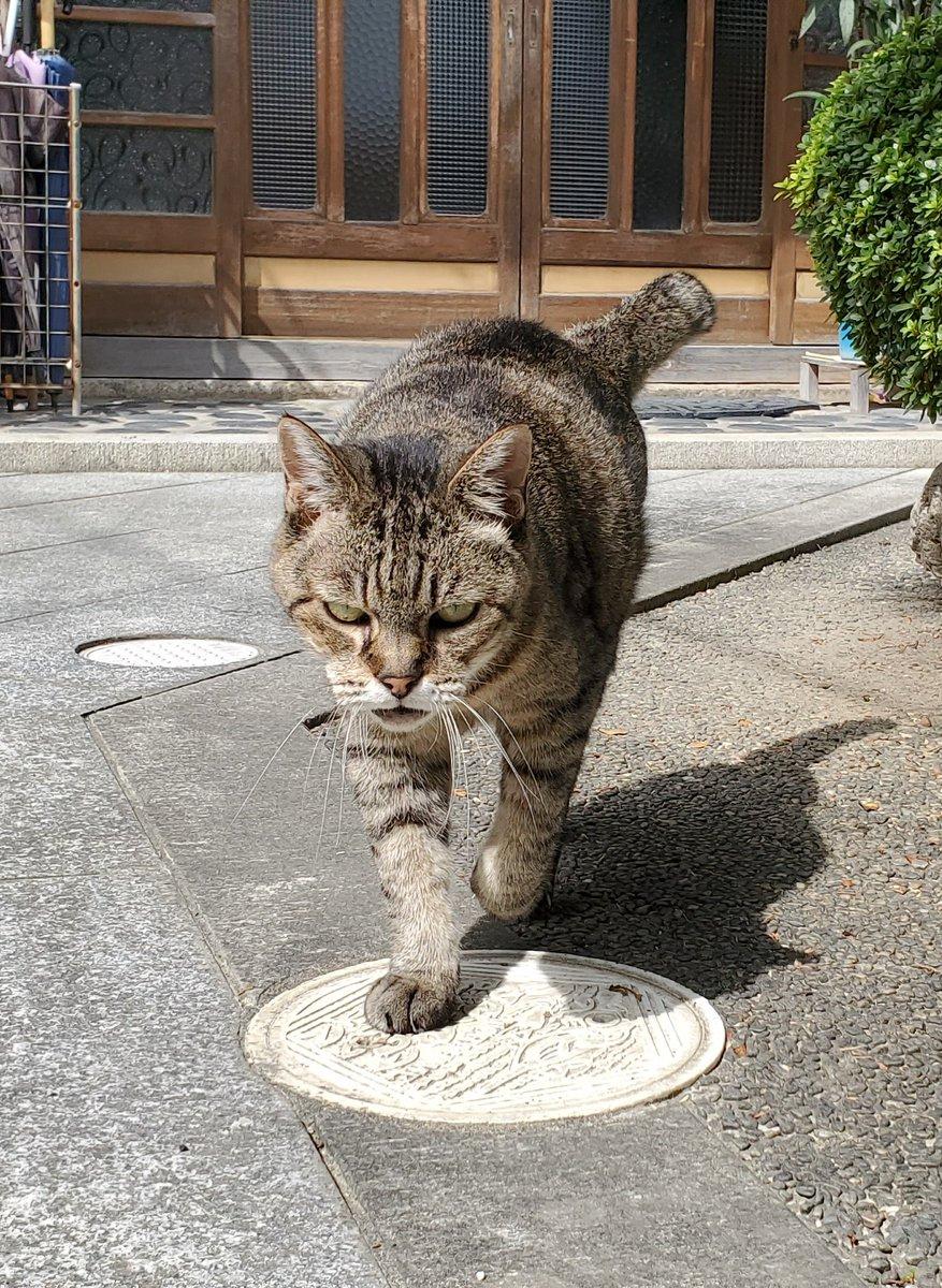 """れいん on Twitter: """"これは顔面ヤクザだけど呼ぶと必ず撫でられに来る近所の猫… """""""
