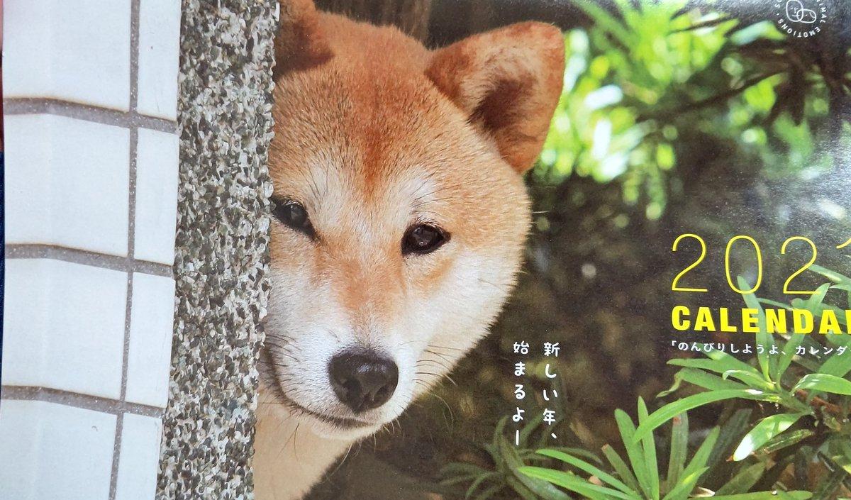 test ツイッターメディア - いぬのきもちの付録カレンダー ニコっぽいてなってる😆 柴犬は皆似てるように見えるけども😅 https://t.co/SZV0xemVhw
