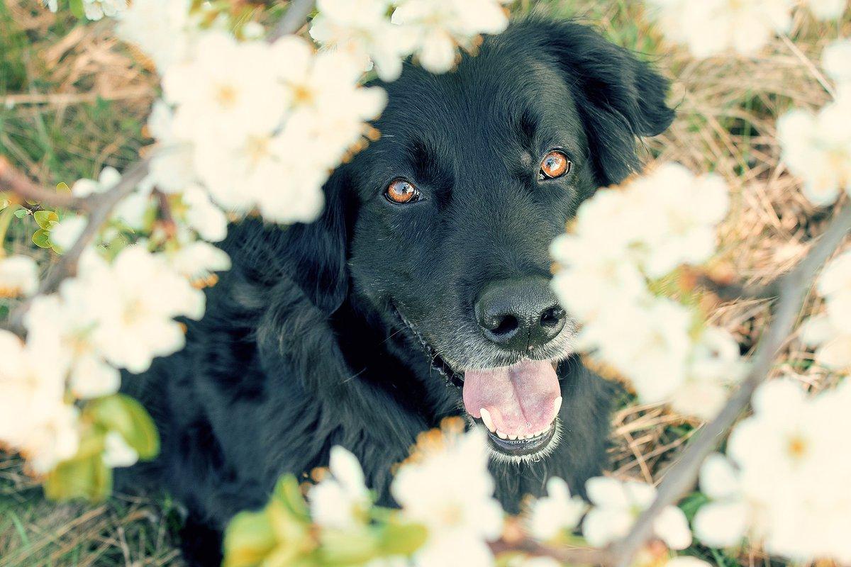 """test ツイッターメディア - #春から大学生 の皆さん!🌸 合格おめでとうございます🐶  犬好きで、""""いぬのきもち""""について興味のある方 コロナ禍で仲の良い大学の友達ができるか不安な部分もあるかと思いますが、 犬好きで集まる新歓なんてやったら最高ですじゃないですか(笑)  どうぞご期待ください🍀 https://t.co/9AoB2b8vmw"""
