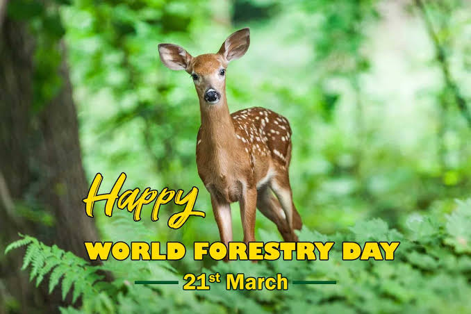 History, top tweets, 2021 date, facts, quotes, calendar, things to do and count down. Naheed Tariq S Tweet World Forest Day 2021 International Day Of Forests 2021 Theme Has Been Declared As Is Forest Restoration A Path To Recovery And Well Being When We Take