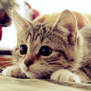 こうした魅力や特徴に癒されて飼い主さんは猫を飼っているのではないでしょうか。そこで、今回は、そんな魅力を持つ癒し猫画像50選!をご紹介します。