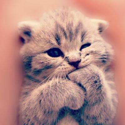 Funny Cute Animals Animalvideostv Twitter