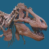 American Museum of Natural History (@AMNH) Twitter profile photo