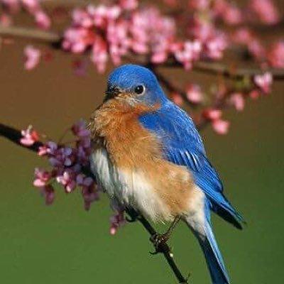 Cutest Birds Cutestbirds Twitter