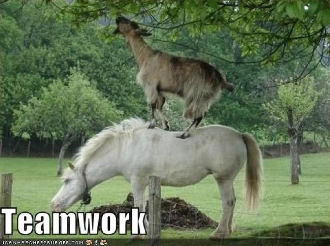 animal-teamwork-11