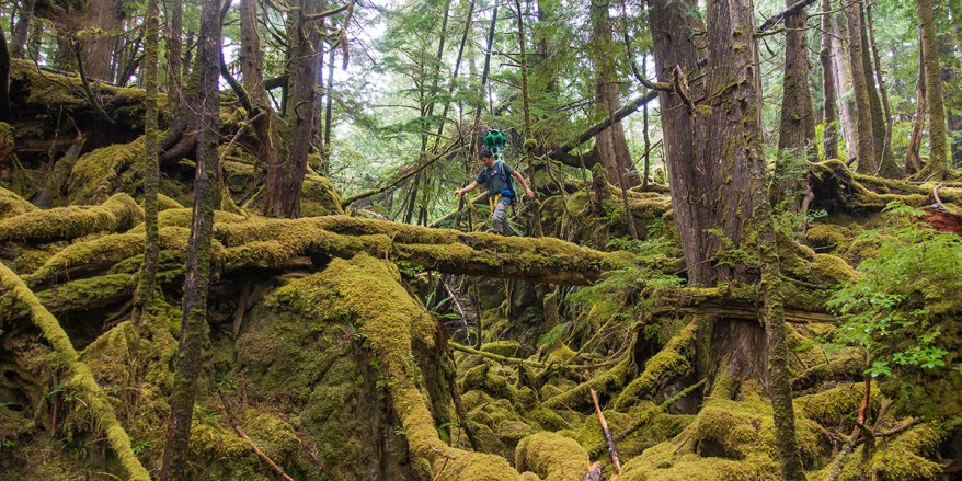 Google Trekker records data at Gwaii Haanas National Park Reserve, National Marine Conservation Area Reserve, and Haida Heritage Site.