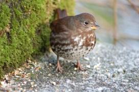 Sparrow no. 1