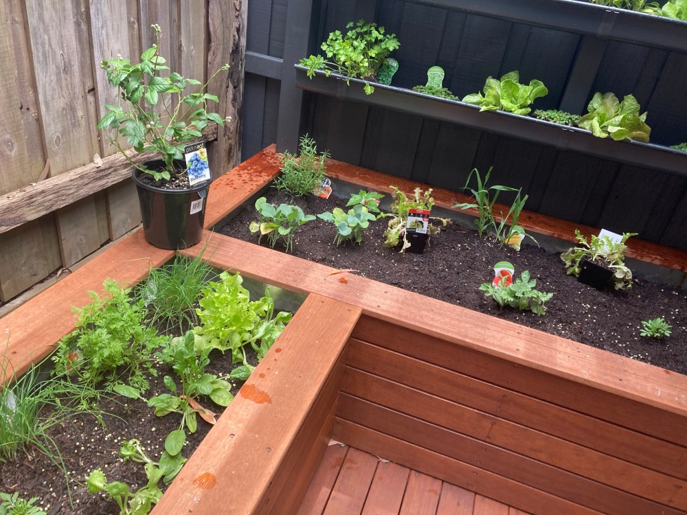 Deck, pergola, planter boxes and vertical planter wall