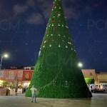Arbol monumental de Morelia retiro