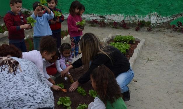 Alunos do pré fazem horta no CEI João de Souza Arruda