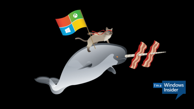 Windows_Insider_Battlecat_Narwhal-3840x2160-4K