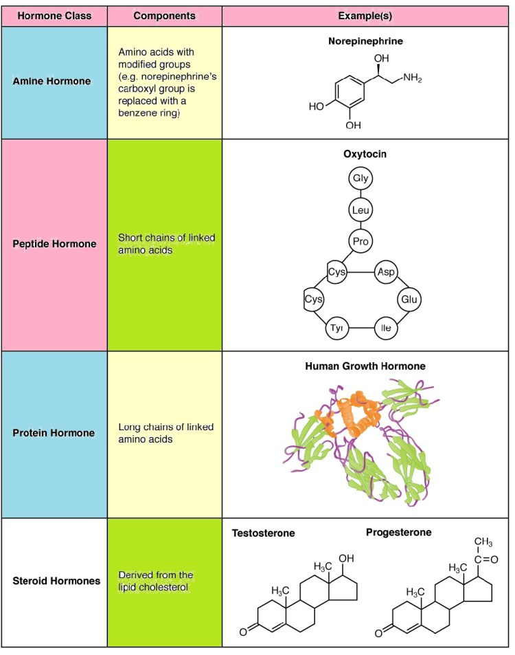 On the basis of chemical nature, classification of hormones hormones
