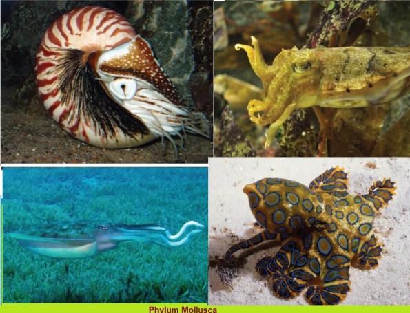 Phylum-Mollusca