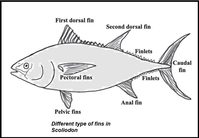 Different type of fins