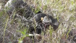 Snake Blocks Trail