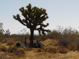 Joshua Tree Shade