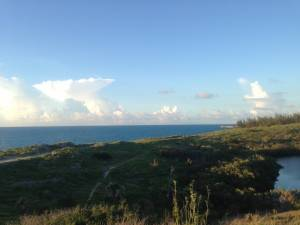 Low-lying, wind-resistant vegetation thrives on the island's sandy cliffs.