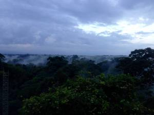 Dawn over the rainforest. I took this photo on my last day at La Selva, from one of the station's observation towers.