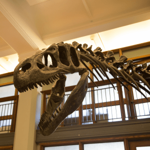 The EEB department dinosaur in Guyot Hall: pretty much the best thing ever.