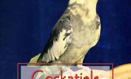 Cockatiels Overcoming Problems in Their Care, Feeding and Breeding PDF