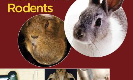 Dentistry in Rabbits and Rodents PDF Download