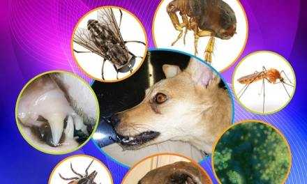 Arthropod-borne Infectious Diseases of the Dog and Cat 2nd Edition PDF