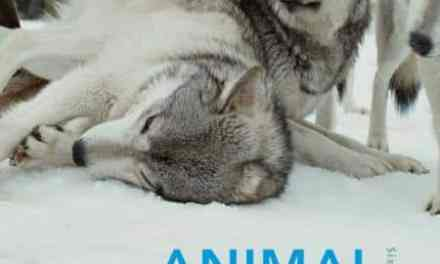 An Introduction to Animal Behaviour 6th Edition