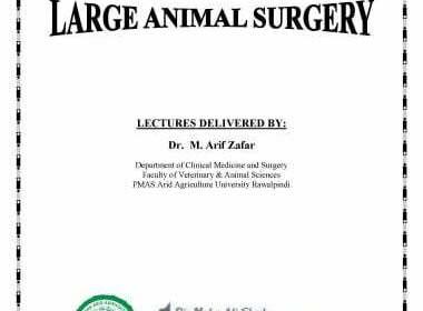 Regional surgery or large animal surgery