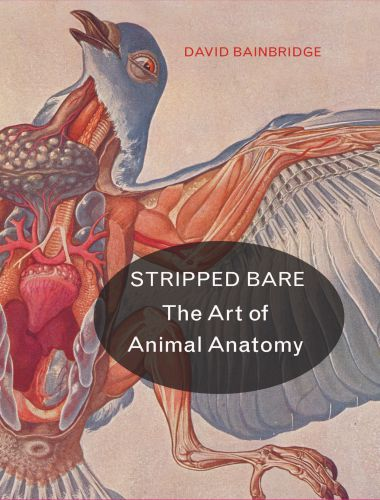 Stripped Bare – The Art of Animal Anatomy