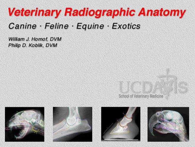 Veterinary Radiographic Anatomy Windows Application 6.0