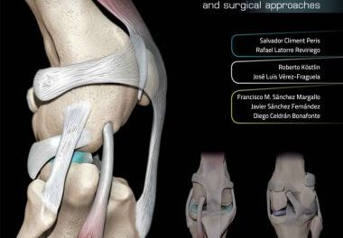 3D Joint Anatomy In Dogs, Main Joint Pathologies and Surgical Approaches
