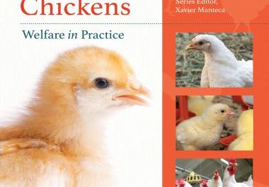 Broiler Chickens: Welfare in Practice