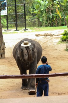 Approaching the mahout to 'hat' him