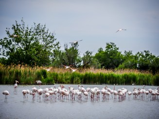 Pink flamingos are the main attraction in the Parc Ornithologicue